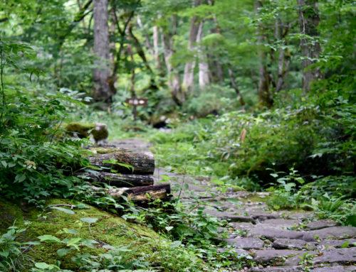 宇津江四十八滝のハイキングで軽い運動や森林浴レジャーどうですか?